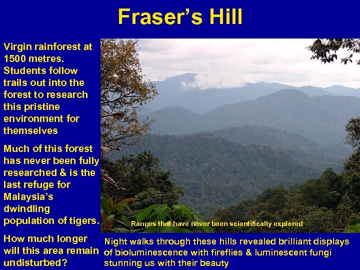 Fraser's Hill Virgin rainforest at 1500 metres. Students follow trails out into the forest