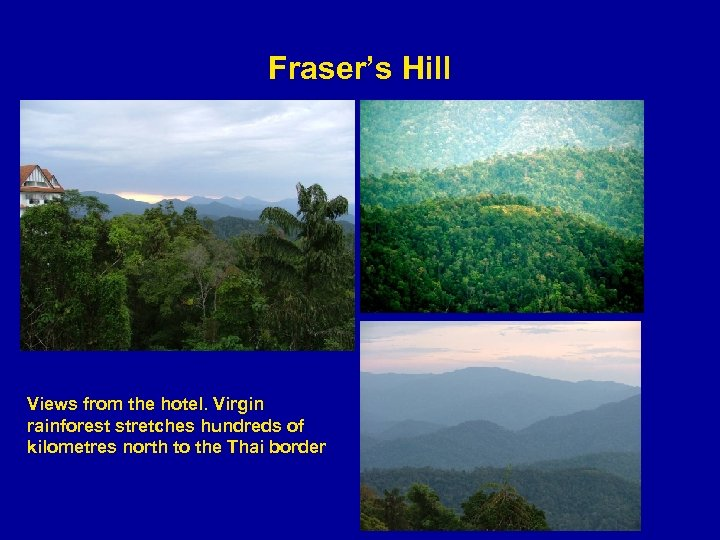 Fraser's Hill Views from the hotel. Virgin rainforest stretches hundreds of kilometres north to