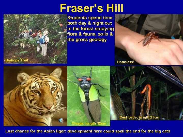 Fraser's Hill Students spend time both day & night out in the forest studying