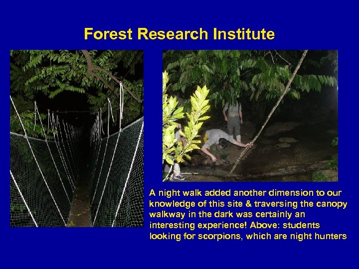 Forest Research Institute A night walk added another dimension to our knowledge of this