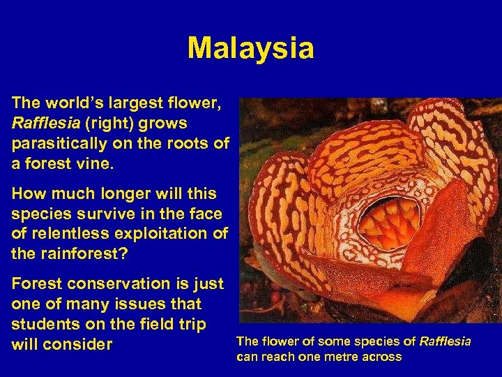 Malaysia The world's largest flower, Rafflesia (right) grows parasitically on the roots of a