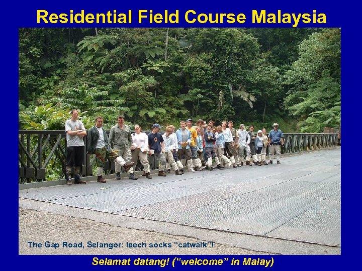 "Residential Field Course Malaysia The Gap Road, Selangor: leech socks ""catwalk""! Selamat datang! (""welcome"""