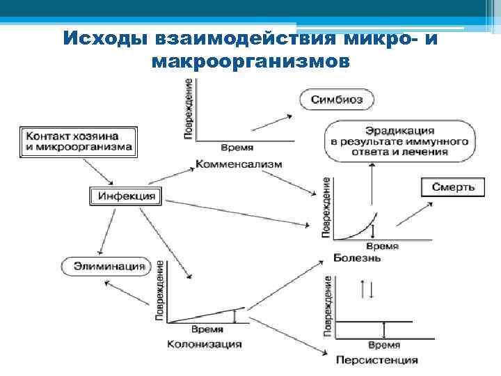Исходы взаимодействия микро- и макроорганизмов