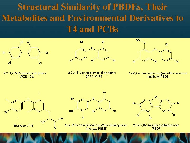 Structural Similarity of PBDEs, Their Metabolites and Environmental Derivatives to T 4 and PCBs