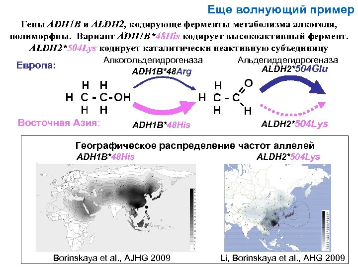 Еще волнующий пример Гены ADH 1 B и ALDH 2, кодирующе ферменты метаболизма алкоголя,