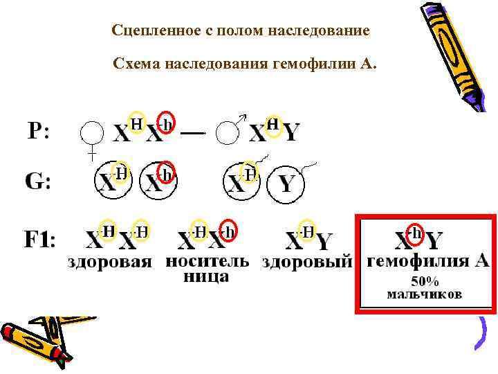 Сцепленное с полом наследование Схема наследования гемофилии А.