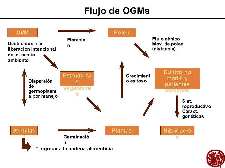 Flujo de OGMs Polen OVM Destinados a la liberación Intencional en el medio ambiente