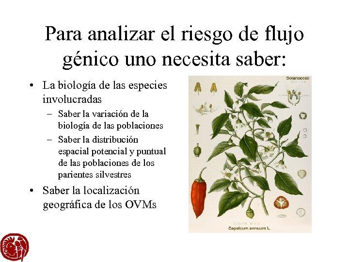 Para analizar el riesgo de flujo génico uno necesita saber: • La biología de