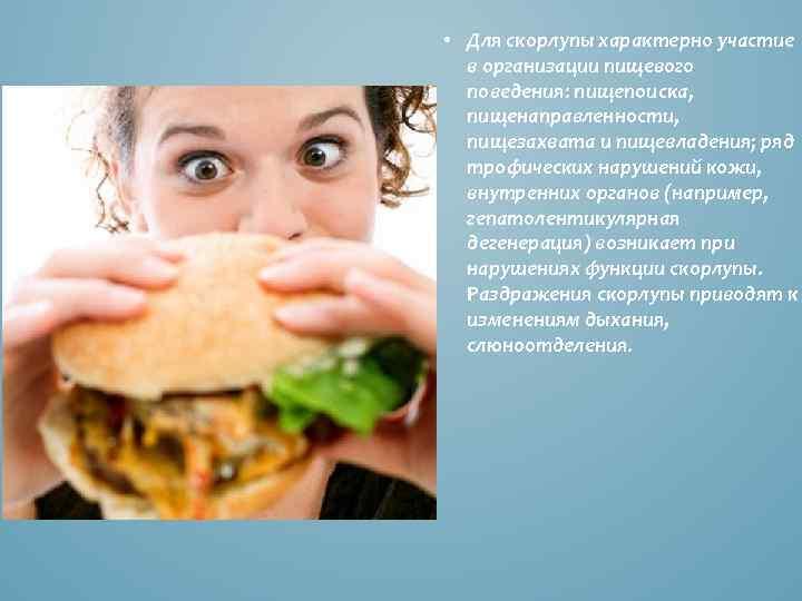 • Для скорлупы характерно участие в организации пищевого поведения: пищепоиска, пищенаправленности, пищезахвата и