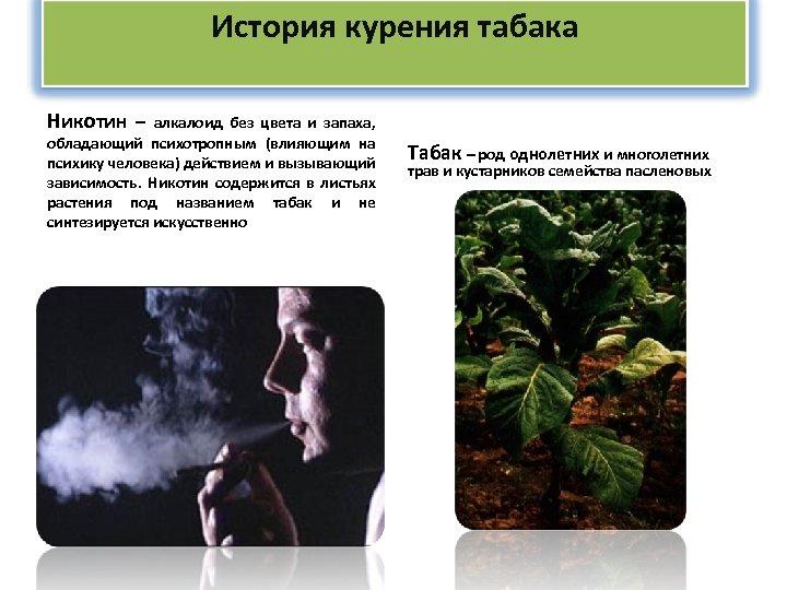 История курения табака Никотин – алкалоид без цвета и запаха, обладающий психотропным (влияющим на
