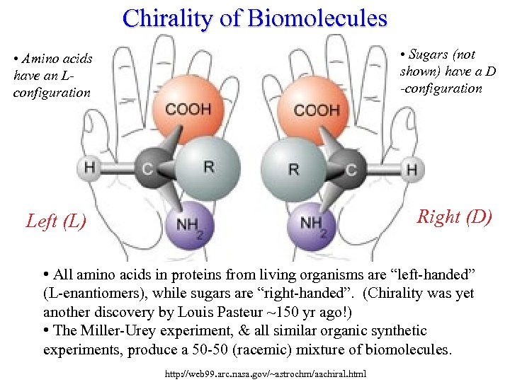 Chirality of Biomolecules • Sugars (not shown) have a D -configuration • Amino acids