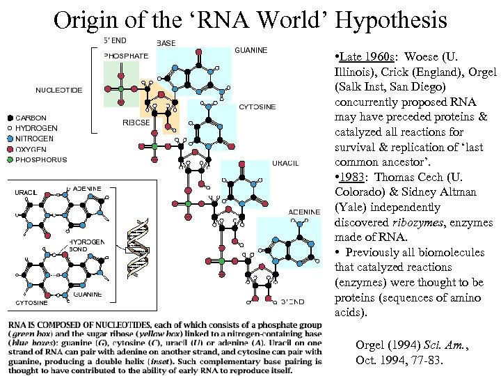 Origin of the 'RNA World' Hypothesis • Late 1960 s: Woese (U. Illinois), Crick