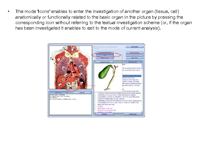 • The mode 'Icons' enables to enter the investigation of another organ (tissue,