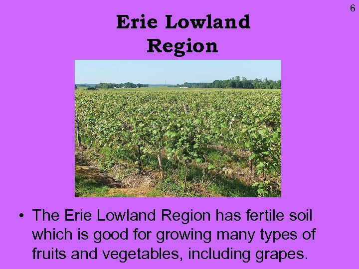 Erie Lowland Region • The Erie Lowland Region has fertile soil which is good