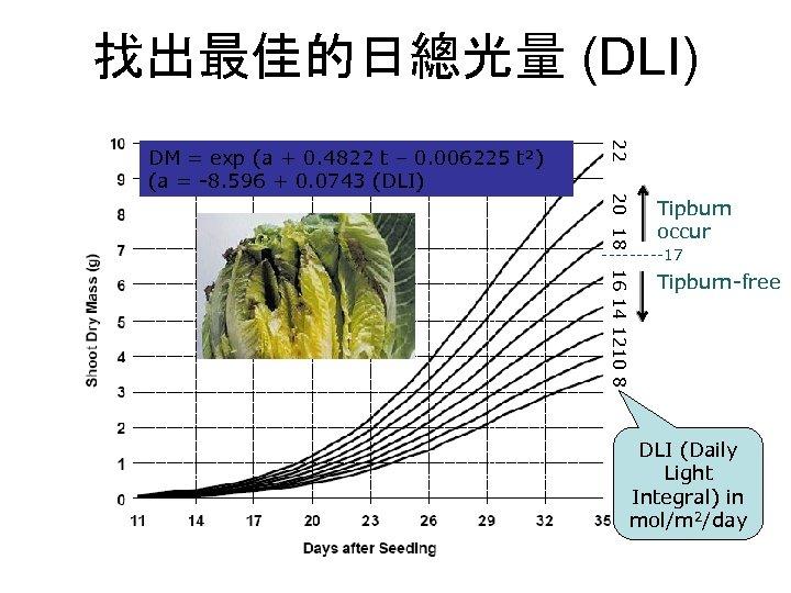 找出最佳的日總光量 (DLI) 22 DM = exp (a + 0. 4822 t – 0. 006225