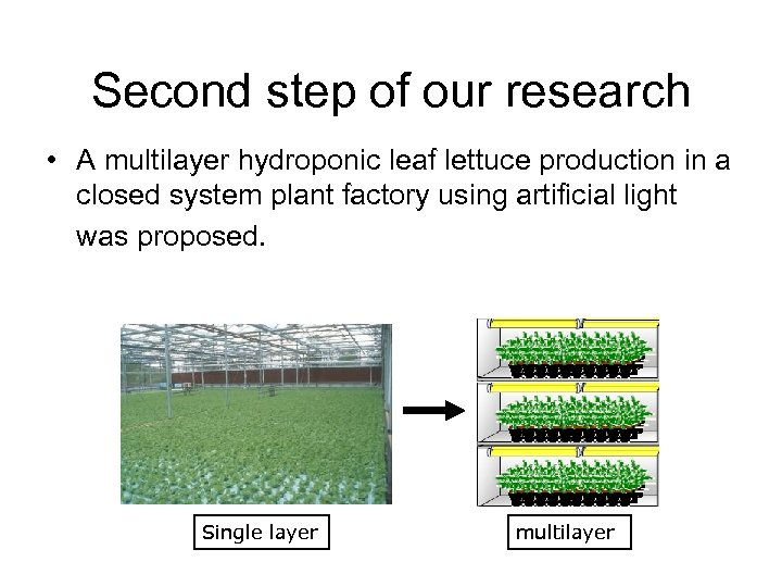 Second step of our research • A multilayer hydroponic leaf lettuce production in a