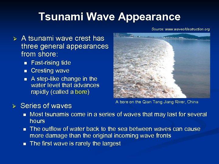 Tsunami Wave Appearance Source: www. waveofdestruction. org Ø A tsunami wave crest has three