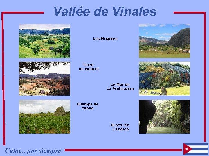 Vallée de Vinales Les Mogotes Terre de culture Le Mur de La Préhistoire Champs