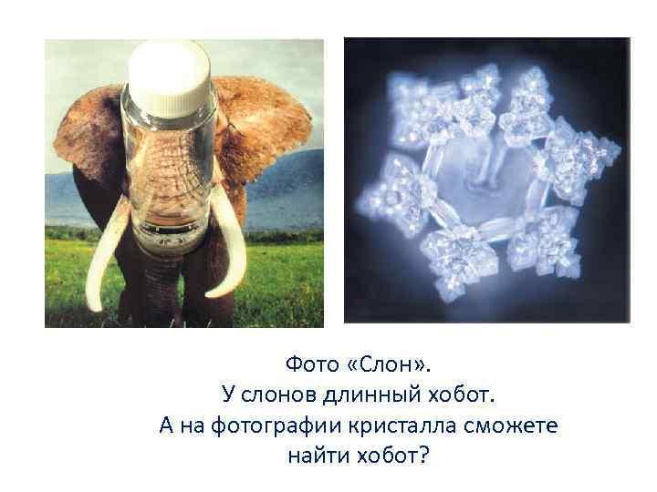 Фото «Слон» . У слонов длинный хобот. А на фотографии кристалла сможете найти хобот?