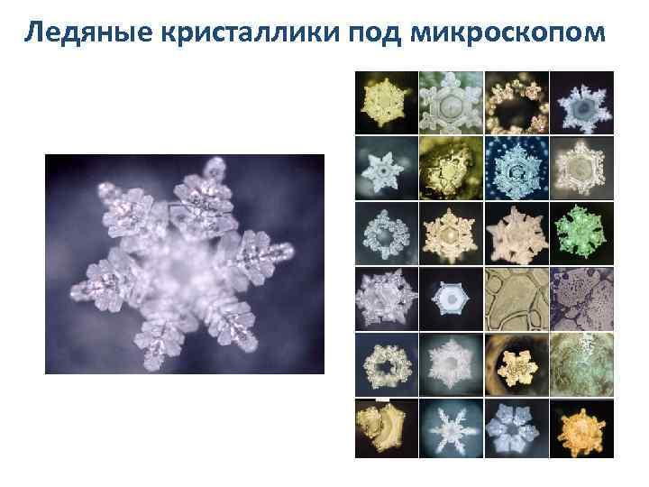 Ледяные кристаллики под микроскопом