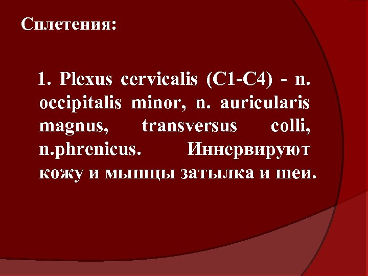 Сплетения: 1. Plexus cervicalis (C 1 -C 4) - n. occipitalis minor, n. auricularis