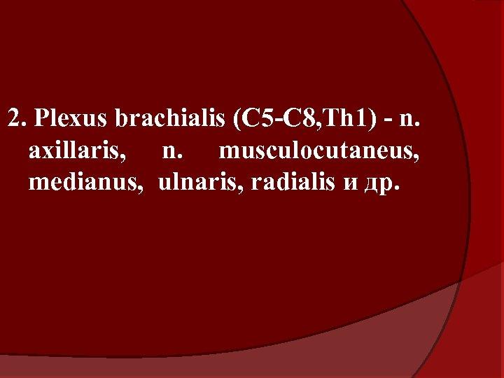 2. Plexus brachialis (C 5 -C 8, Th 1) - n. axillaris, n. musculocutaneus,
