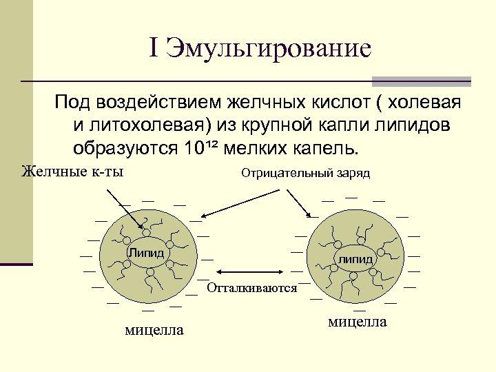 Ι Эмульгирование Под воздействием желчных кислот ( холевая и литохолевая) из крупной капли липидов