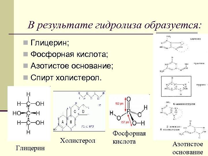 В результате гидролиза образуется: n Глицерин; n Фосфорная кислота; n Азотистое основание; n Спирт