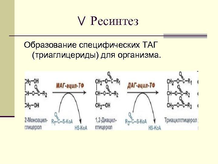 Ресинтез Образование специфических ТАГ (триаглицериды) для организма.