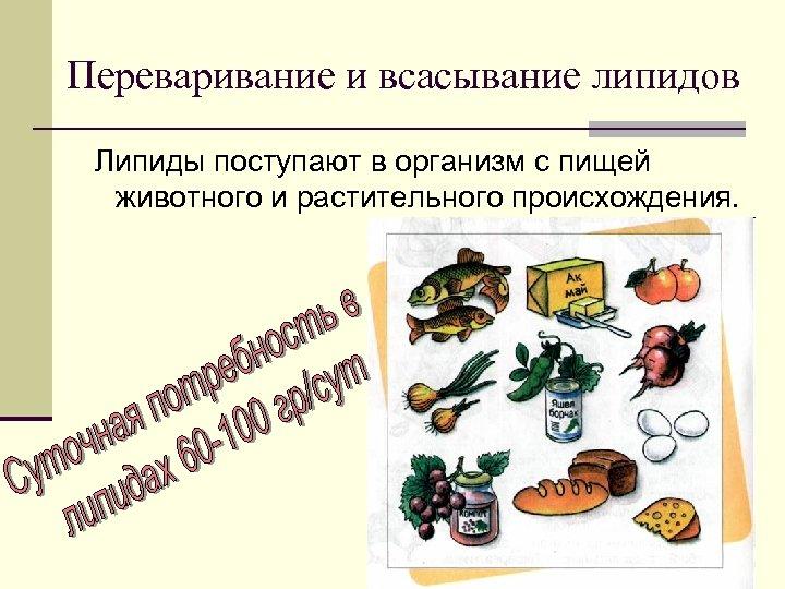 Переваривание и всасывание липидов Липиды поступают в организм с пищей животного и растительного происхождения.