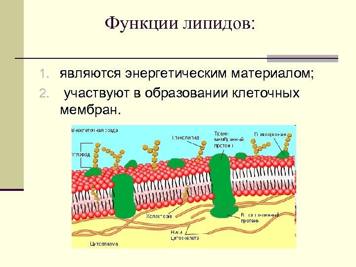 Функции липидов: 1. являются энергетическим материалом; 2. участвуют в образовании клеточных мембран.
