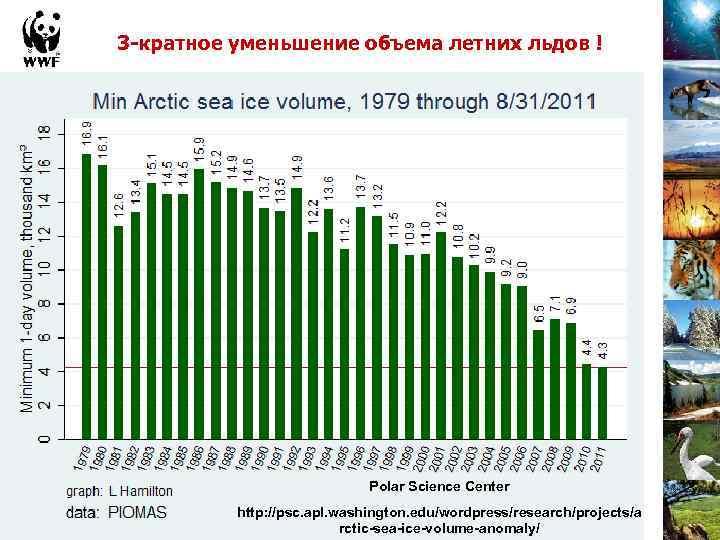 3 -кратное уменьшение объема летних льдов ! Polar Science Center http: //psc. apl. washington.