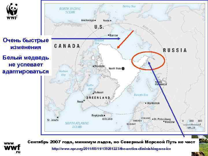 Очень быстрые изменения Белый медведь не успевает адаптироваться Сентябрь 2007 года, минимум льдов, но