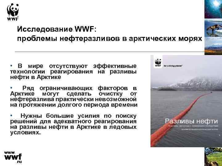 Исследование WWF: проблемы нефтеразливов в арктических морях • В мире отсутствуют эффективные технологии реагирования