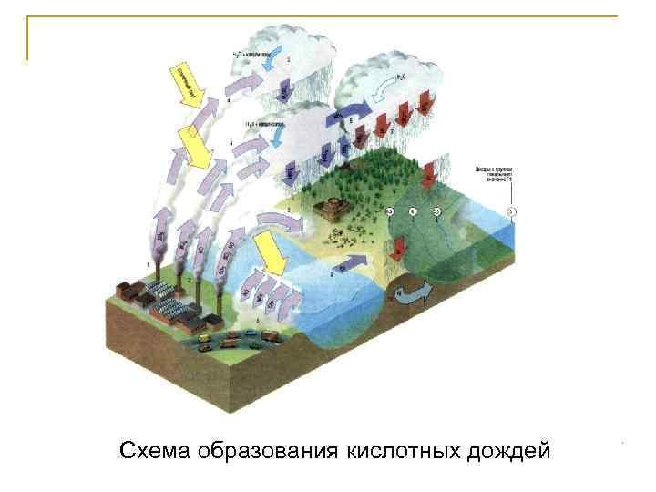 Схема образования кислотных дождей