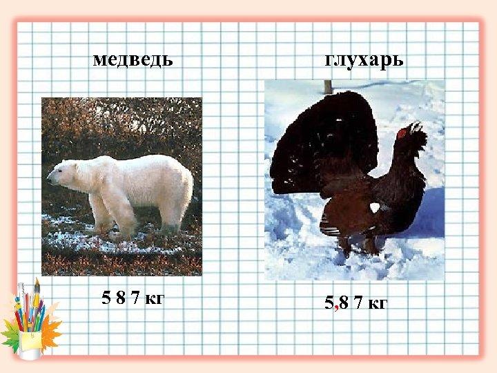 медведь 5 8 7 кг глухарь 5, 8 7 кг