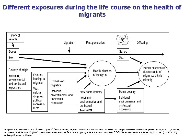 Different exposures during the life course on the health of migrants Adapted from Reeske,