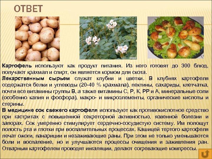 ОТВЕТ Картофель используют как продукт питания. Из него готовят до 300 блюд, получают крахмал