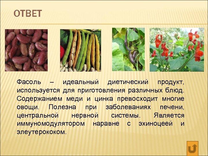 ОТВЕТ Фасоль – идеальный диетический продукт, используется для приготовления различных блюд. Содержанием меди и