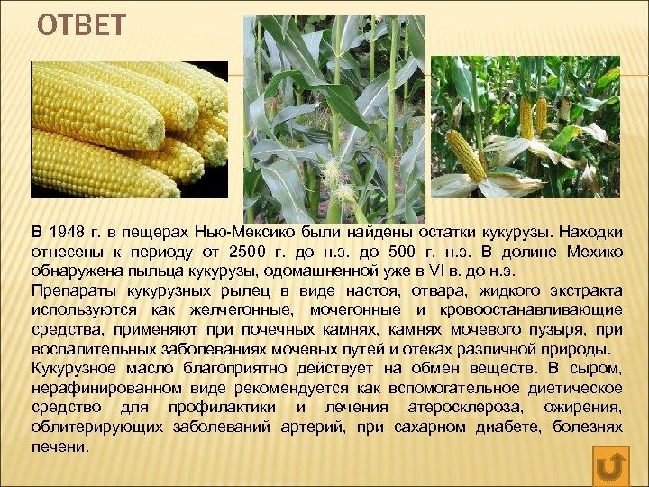 ОТВЕТ В 1948 г. в пещерах Нью-Мексико были найдены остатки кукурузы. Находки отнесены к