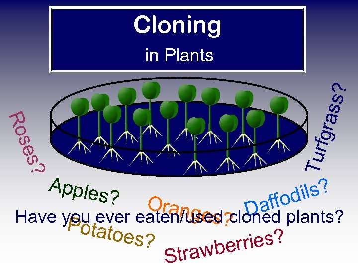 Cloning Apple Turf es? Ros gras s? in Plants s? Orang ils? fod f