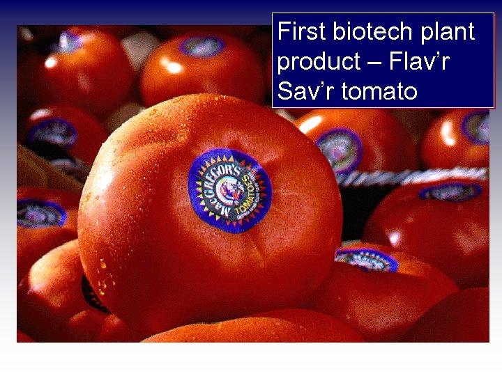 First biotech plant product – Flav'r Sav'r tomato