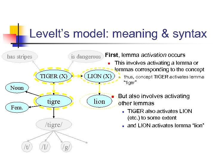 Levelt's model: meaning & syntax n is dangerous First, lemma activation occurs has stripes