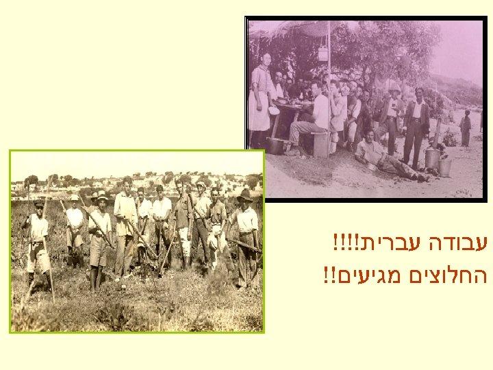 עבודה עברית!!!! החלוצים מגיעים!!