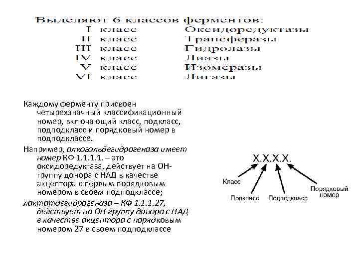Каждому ферменту присвоен четырехзначный классификационный номер, включающий класс, подподкласс и порядковый номер в подподклассе.