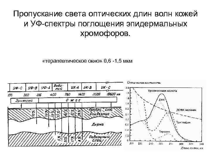 Пропускание света оптических длин волн кожей и УФ-спектры поглощения эпидермальных хромофоров. «терапевтическое окно» 0,