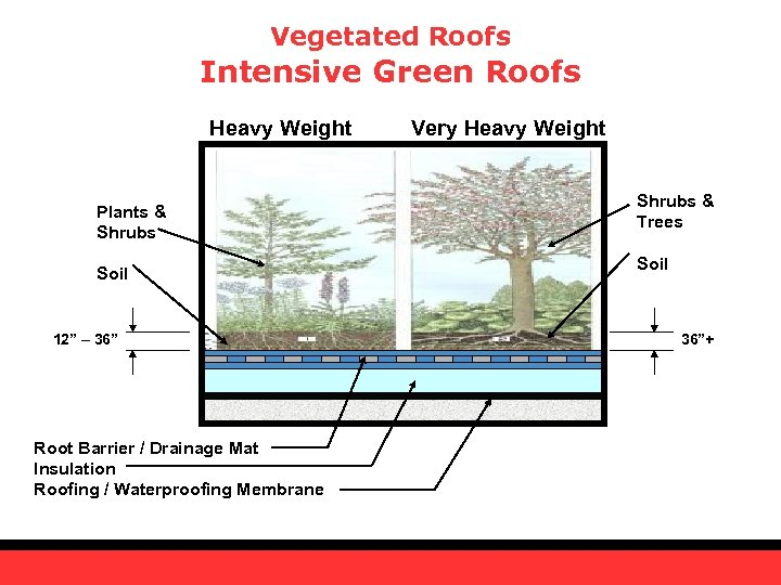 "Vegetated Roofs Intensive Green Roofs Heavy Weight Plants & Shrubs Soil 12"" – 36"""