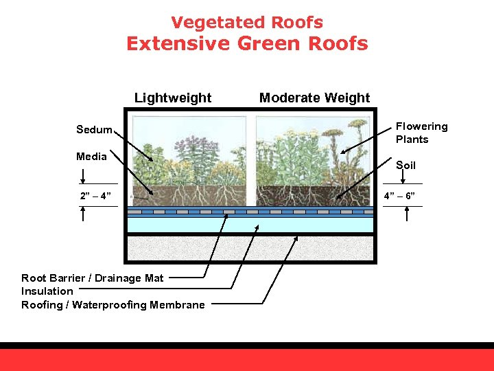 "Vegetated Roofs Extensive Green Roofs Lightweight Sedum Media 2"" – 4"" Root Barrier /"