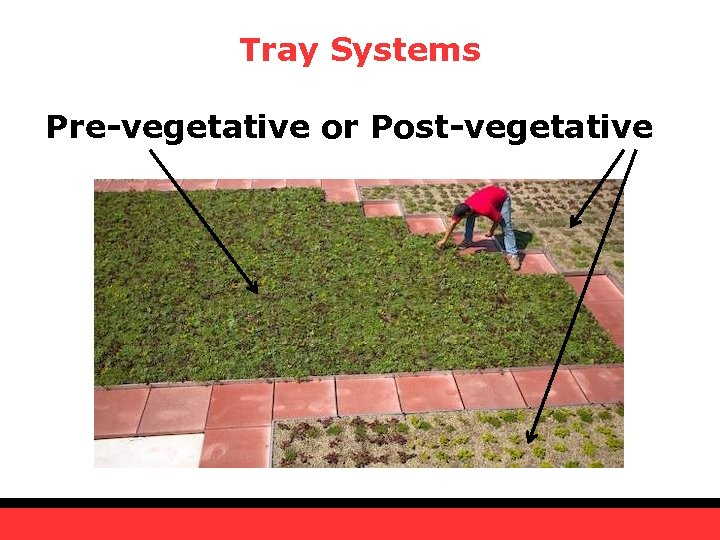 Tray Systems Pre-vegetative or Post-vegetative