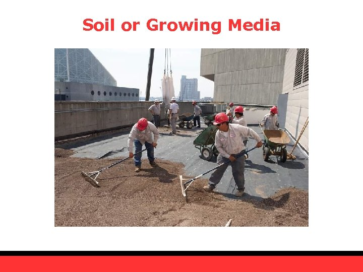 Soil or Growing Media